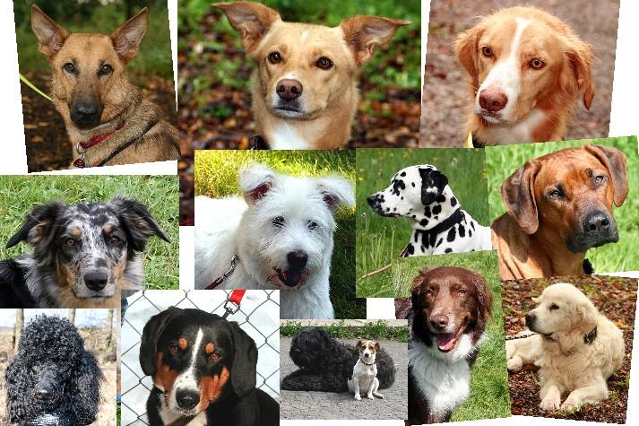 Fotomix Hunde