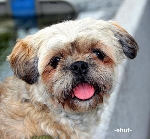 Hund Belle